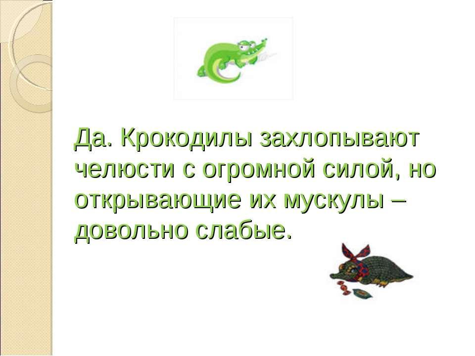 Да. Крокодилы захлопывают челюсти с огромной силой, но открывающие их мускулы...