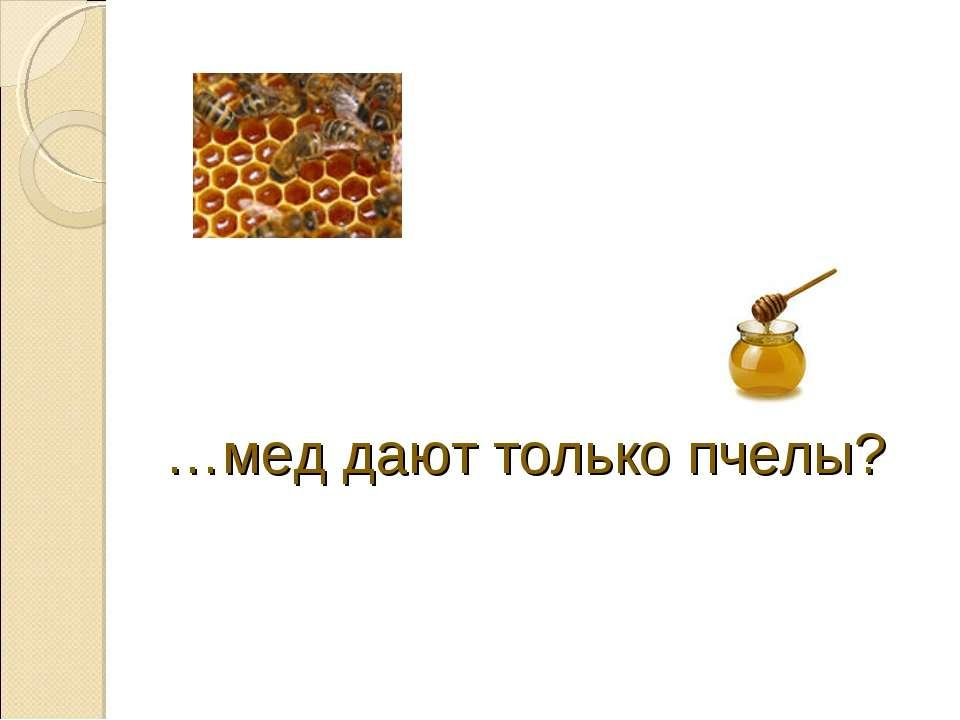 …мед дают только пчелы?