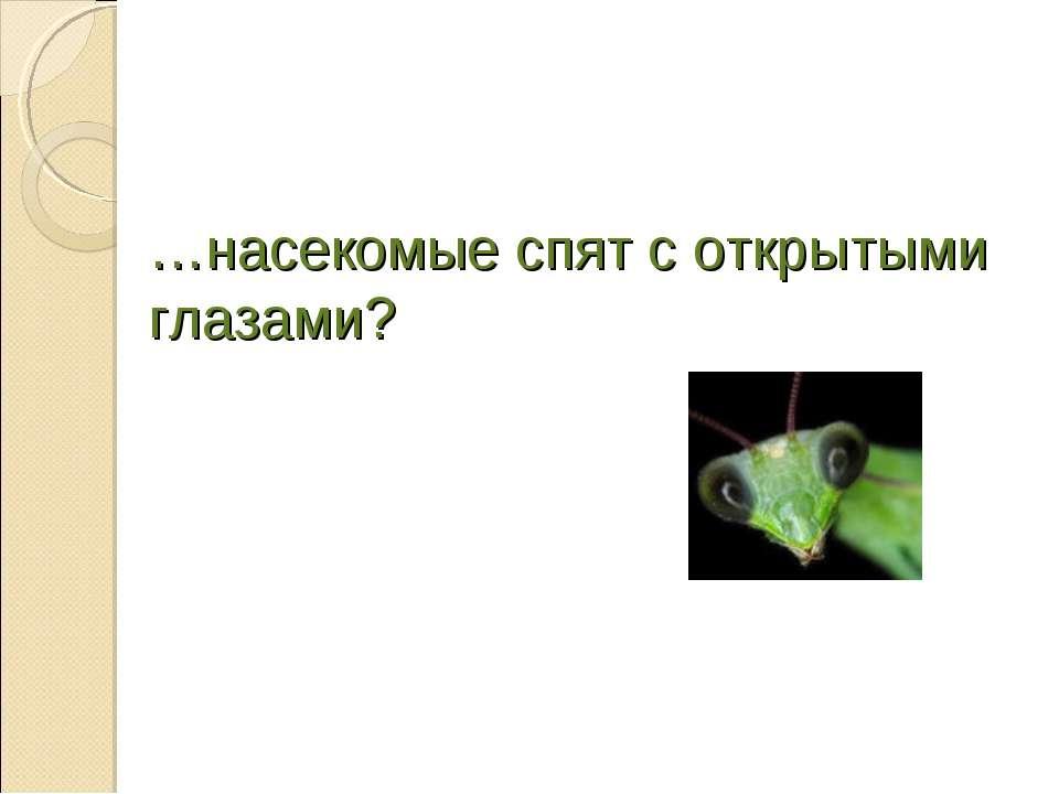 …насекомые спят с открытыми глазами?