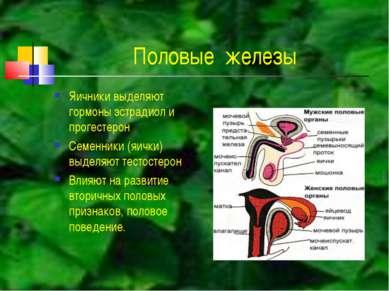 Половые железы Яичники выделяют гормоны эстрадиол и прогестерон Семенники (яи...