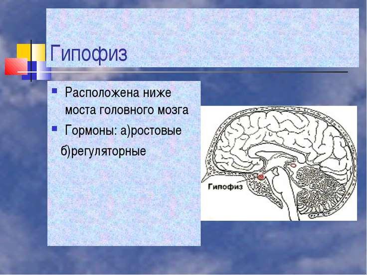 Гипофиз Расположена ниже моста головного мозга Гормоны: а)ростовые б)регулято...
