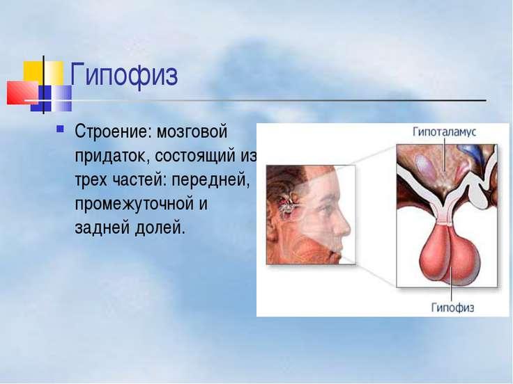 Гипофиз Строение: мозговой придаток, состоящий из трех частей: передней, пром...