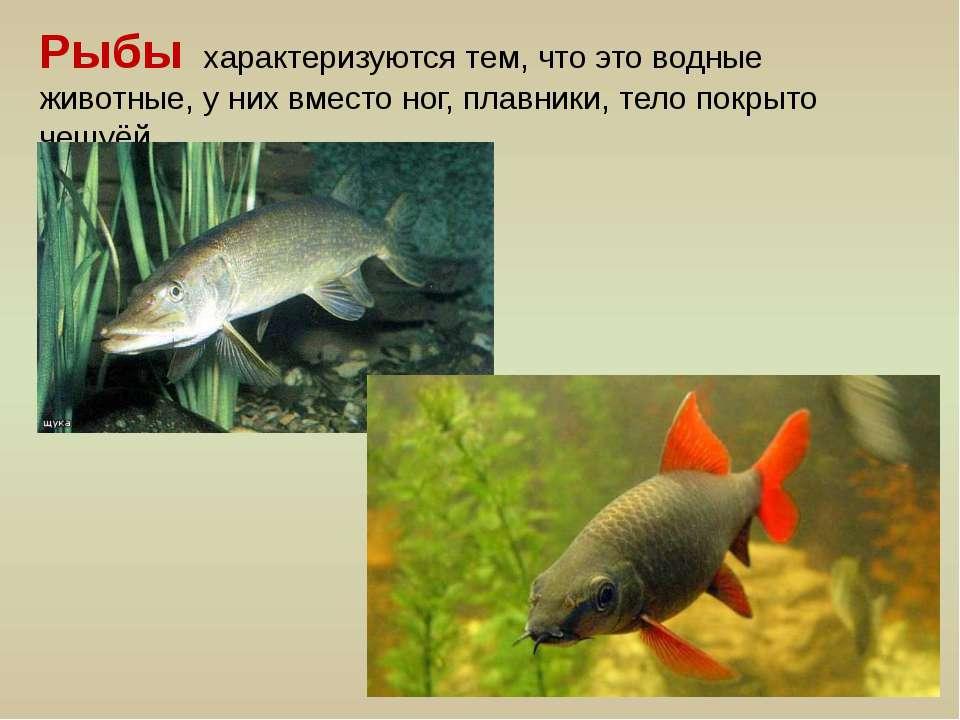 Рыбы характеризуются тем, что это водные животные, у них вместо ног, плавники...