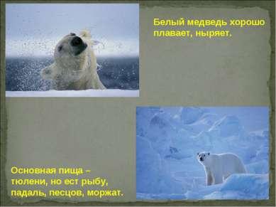 Основная пища – тюлени, но ест рыбу, падаль, песцов, моржат. Белый медведь хо...