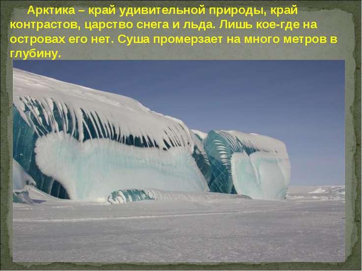 Арктика – край удивительной природы, край контрастов, царство снега и льда. Л...