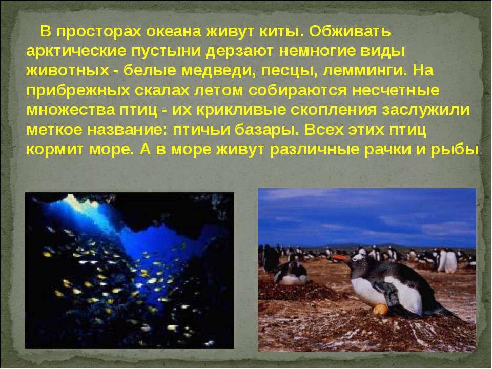 В просторах океана живут киты. Обживать арктические пустыни дерзают немногие ...