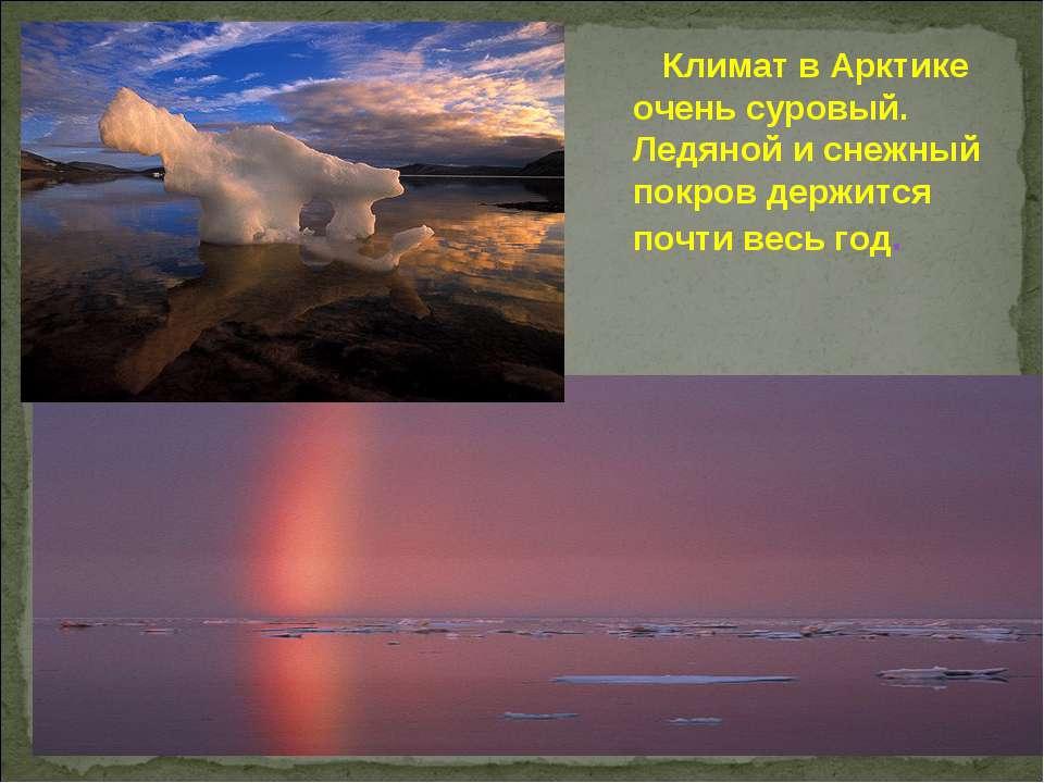 Климат в Арктике очень суровый. Ледяной и снежный покров держится почти весь ...