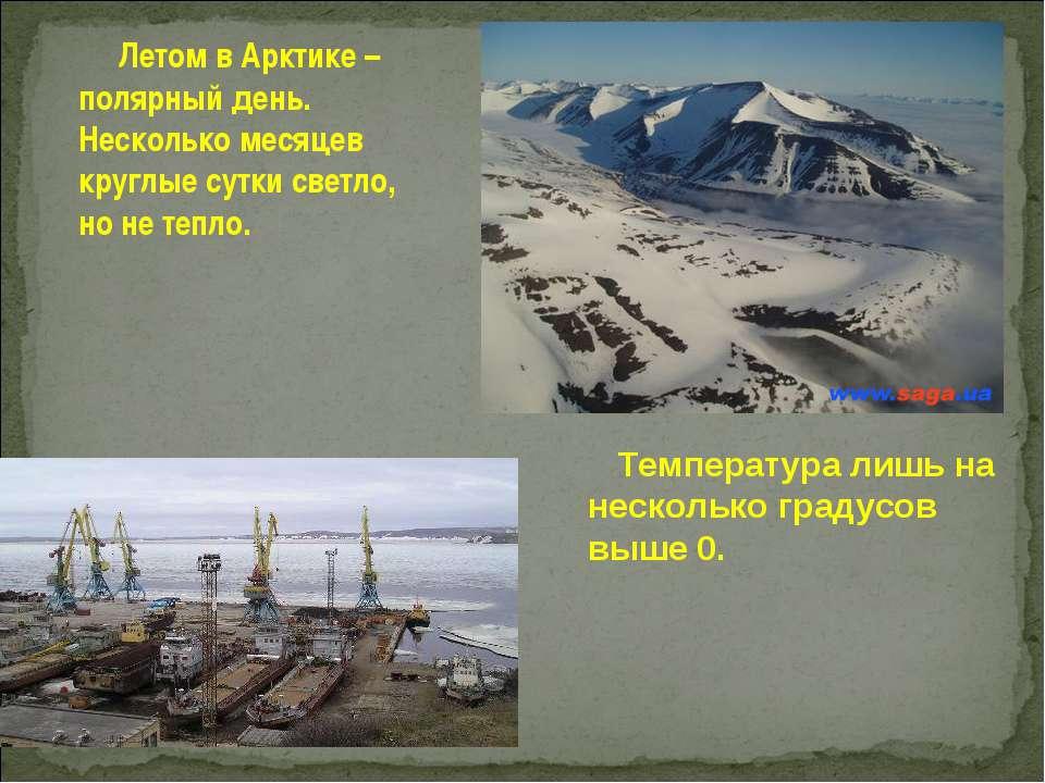 Летом в Арктике – полярный день. Несколько месяцев круглые сутки светло, но н...
