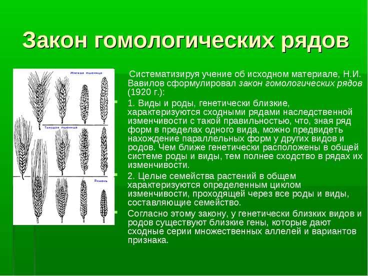 Закон гомологических рядов Систематизируя учение об исходном материале, Н.И. ...