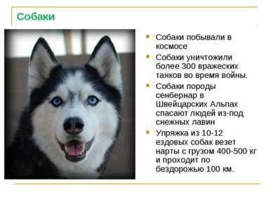 Собаки Собаки побывали в космосе Собаки уничтожили более 300 вражеских танков...