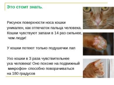 Это стоит знать. Рисунок поверхности носа кошки уникален, как отпечаток пальц...