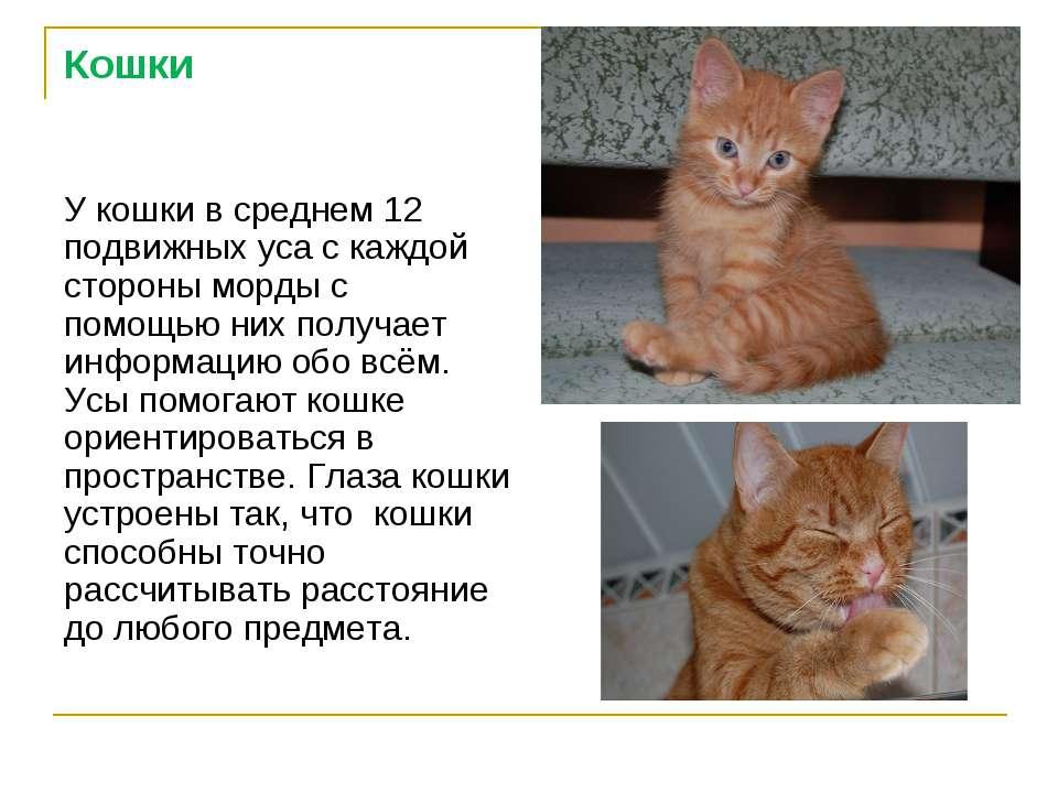 Кошки У кошки в среднем 12 подвижных уса с каждой стороны морды с помощью них...