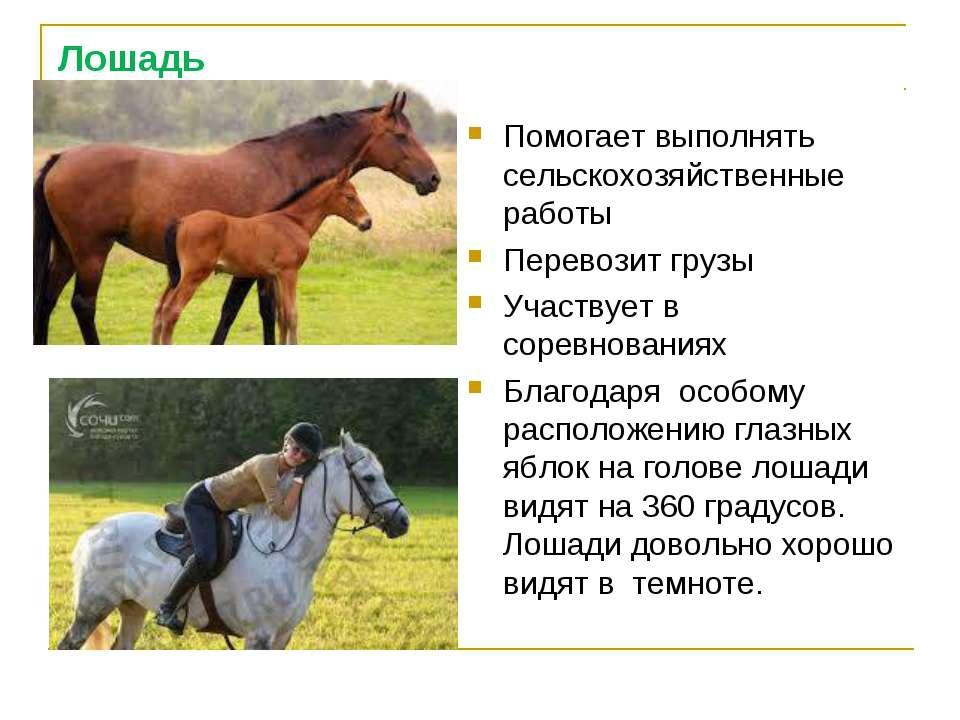 Лошадь Помогает выполнять сельскохозяйственные работы Перевозит грузы Участву...