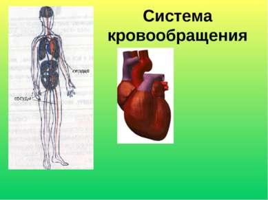 Система кровообращения