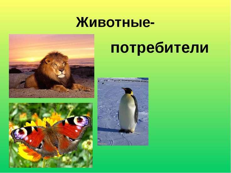 Животные- потребители