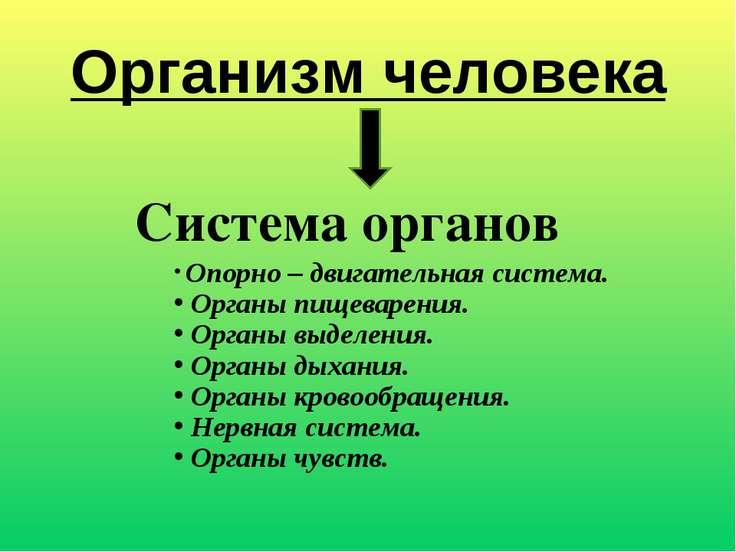 Организм человека Система органов Опорно – двигательная система. Органы пищев...