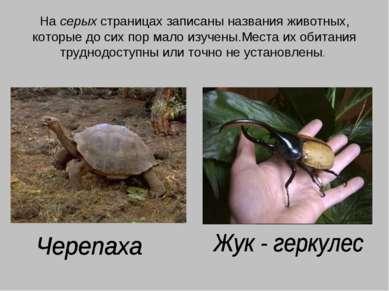 На серых страницах записаны названия животных, которые до сих пор мало изучен...