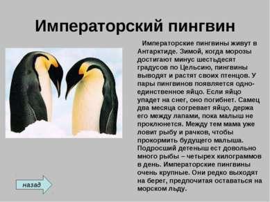 Императорский пингвин Императорские пингвины живут в Антарктиде. Зимой, когда...