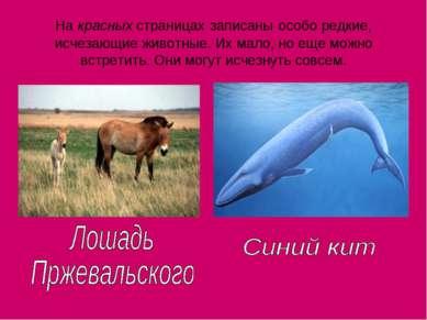 На красных страницах записаны особо редкие, исчезающие животные. Их мало, но ...