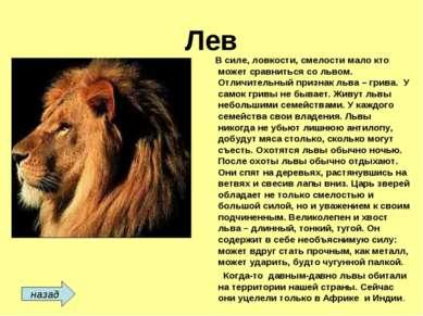 Лев В силе, ловкости, смелости мало кто может сравниться со львом. Отличитель...