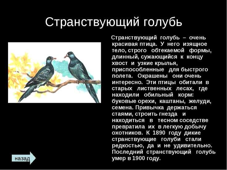 Странствующий голубь Странствующий голубь – очень красивая птица. У него изящ...