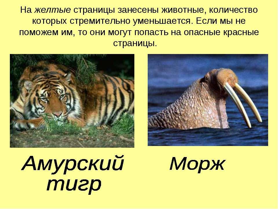 На желтые страницы занесены животные, количество которых стремительно уменьша...