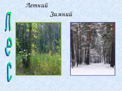 Летний Зимний