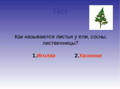 Тест Как называются листья у ели, сосны, лиственницы? 1.Иголки 2.Хвоинки