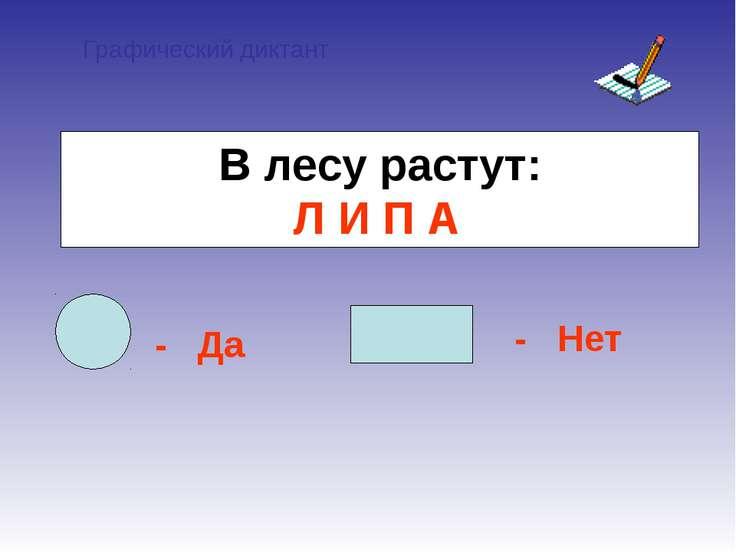 Графический диктант - Да - Нет В лесу растут: Л И П А