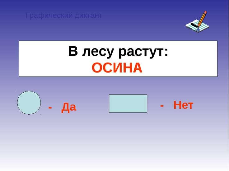 Графический диктант - Да - Нет В лесу растут: ОСИНА