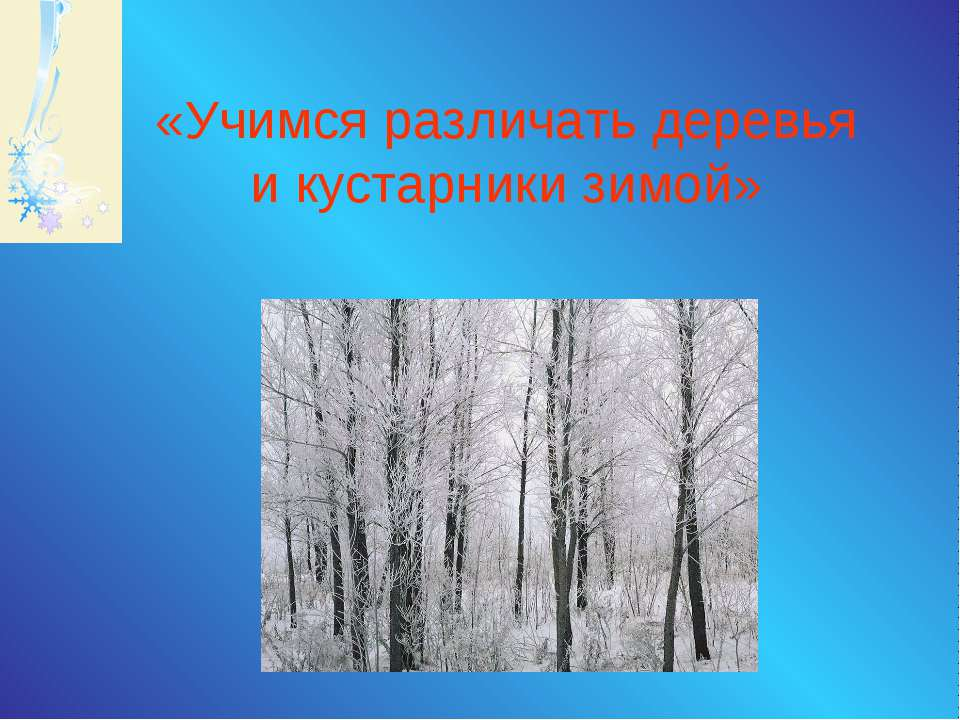 «Учимся различать деревья и кустарники зимой»