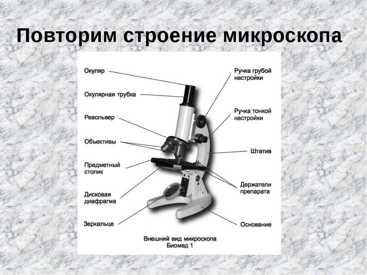 Повторим строение микроскопа