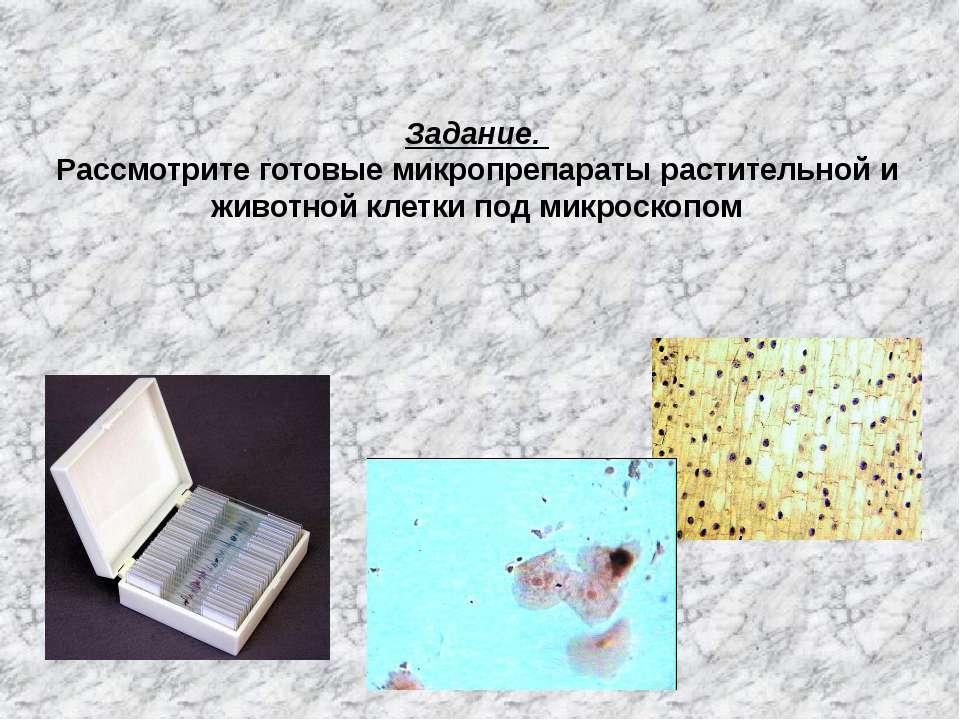 Задание. Рассмотрите готовые микропрепараты растительной и животной клетки по...