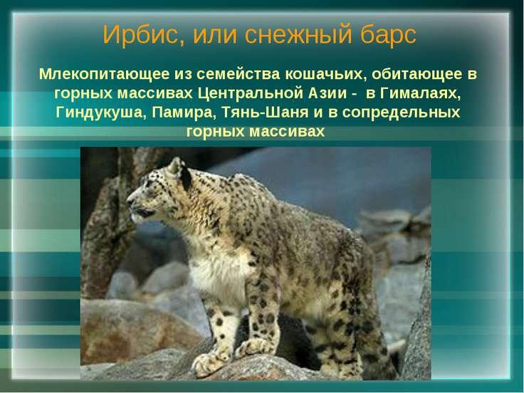 Ирбис, или снежный барс Млекопитающее из семейства кошачьих, обитающее в горн...