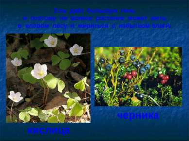 Ель даёт большую тень и поэтому не всякое растение может жить в еловом лесу и...