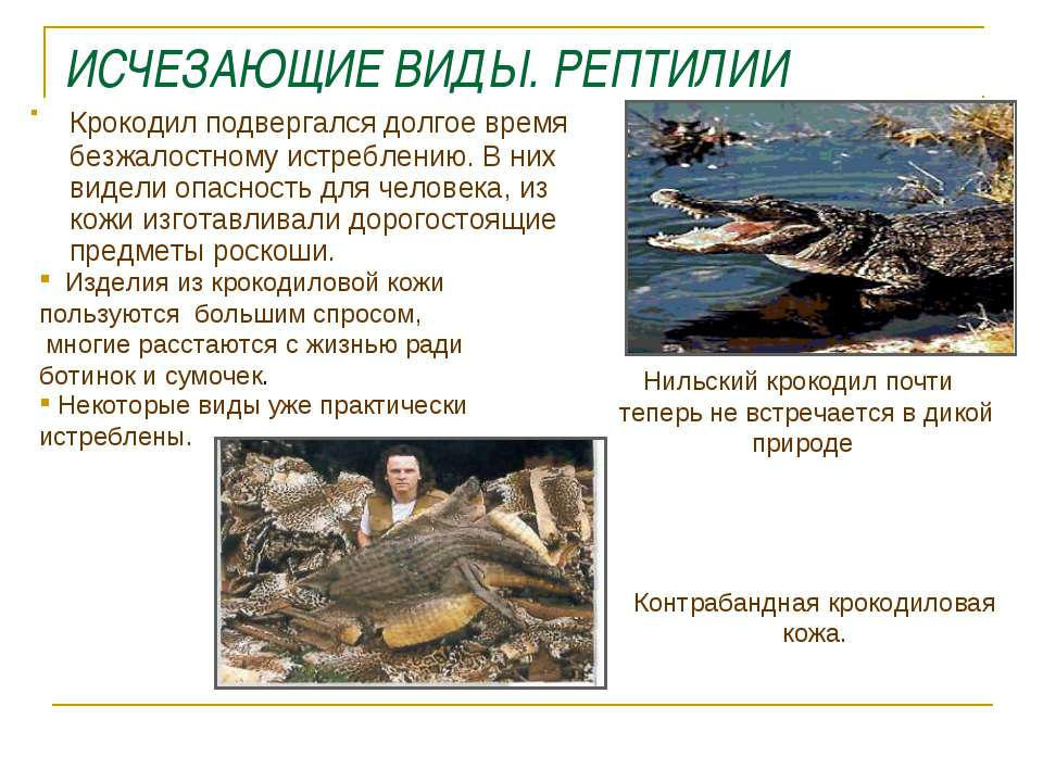 ИСЧЕЗАЮЩИЕ ВИДЫ. РЕПТИЛИИ Крокодил подвергался долгое время безжалостному ист...