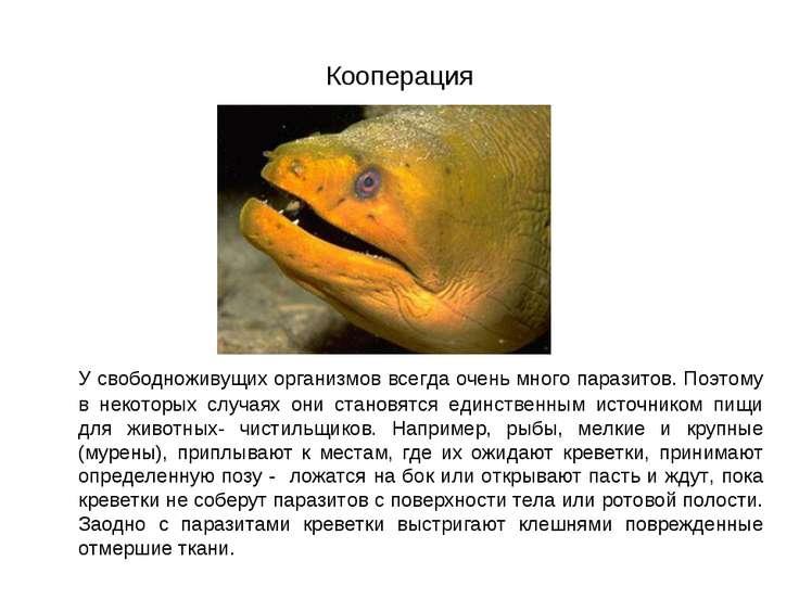 Кооперация У свободноживущих организмов всегда очень много паразитов. Поэтому...