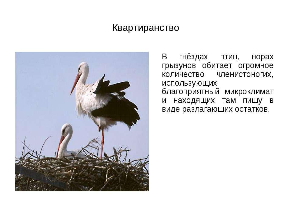 Квартиранство В гнёздах птиц, норах грызунов обитает огромное количество член...