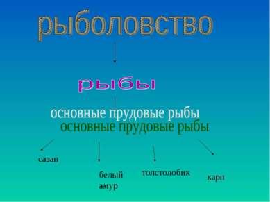 сазан белый амур толстолобик карп