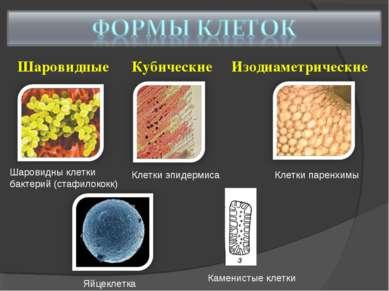 Шаровидные Кубические Изодиаметрические Шаровидны клетки бактерий (стафилокок...