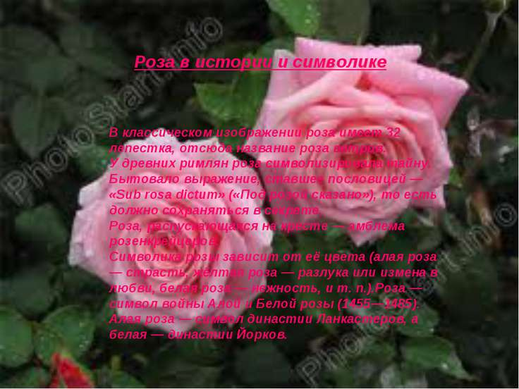 В классическом изображении роза имеет 32 лепестка, отсюда название роза ветро...