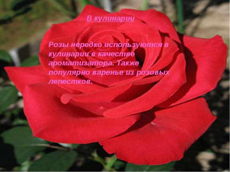 В кулинарии Розы нередко используются в кулинарии в качестве ароматизатора. Т...