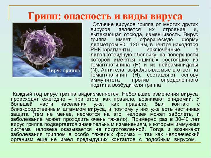 Грипп: опасность и виды вируса Каждый год вирус гриппа видоизменяется. Неболь...