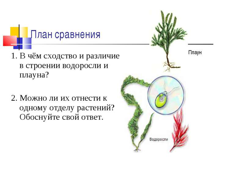 План сравнения 1. В чём сходство и различие в строении водоросли и плауна? 2....