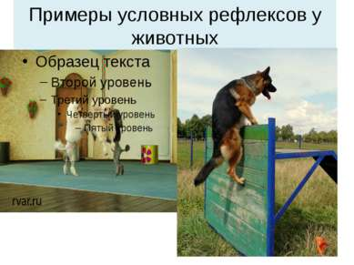 Примеры условных рефлексов у животных