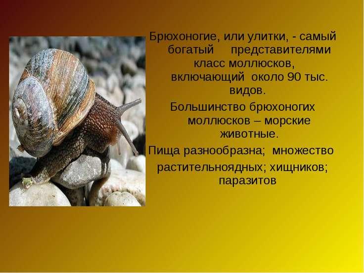 Брюхоногие, или улитки, - самый богатый представителями класс моллюсков, вклю...