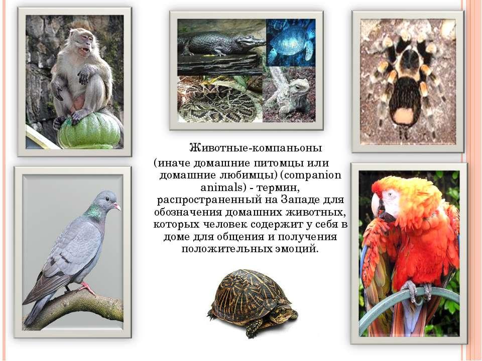 Животные-компаньоны (иначе домашние питомцы или домашние любимцы) (companion ...