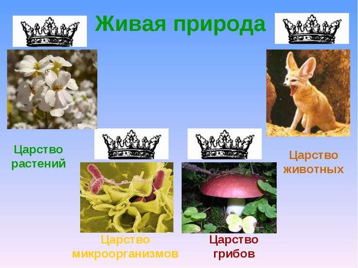 Живая природа Царство растений Царство микроорганизмов Царство грибов Царство...