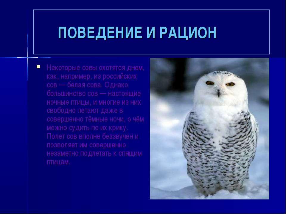 ПОВЕДЕНИЕ И РАЦИОН Некоторые совы охотятся днем, как, например, из российских...