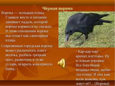 Чёрная ворона Ворона — всеядная птица. Главное место в питании занимает падал...